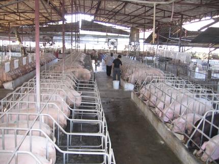 giải quyết vấn đề dịch bệnh cho trang trại