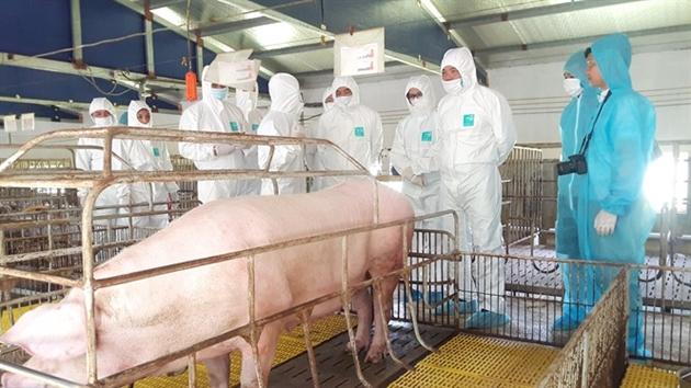 Các biện pháp chăn nuôi an toàn phòng ngừa dịch bệnh hiệu quả