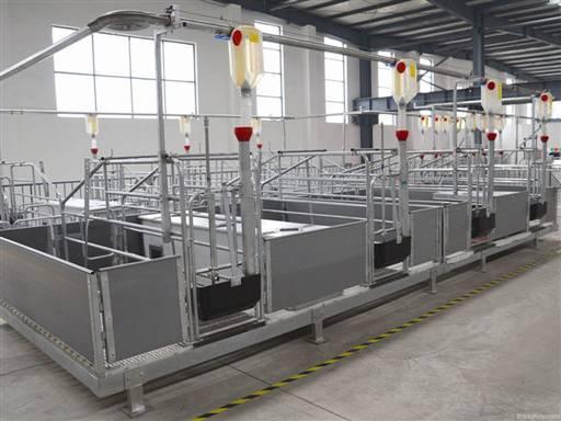 hiện đại hóa thiết bị chăn nuôi heo