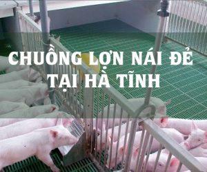 chuong-lon-nai-de-tai-ha-tinh-3dz5irakhnbrcxlmkoopog.jpg