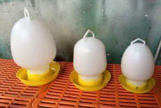 máng-uống-của-gà-3b9r6z0ouibodhv1rwqj9c.jpg